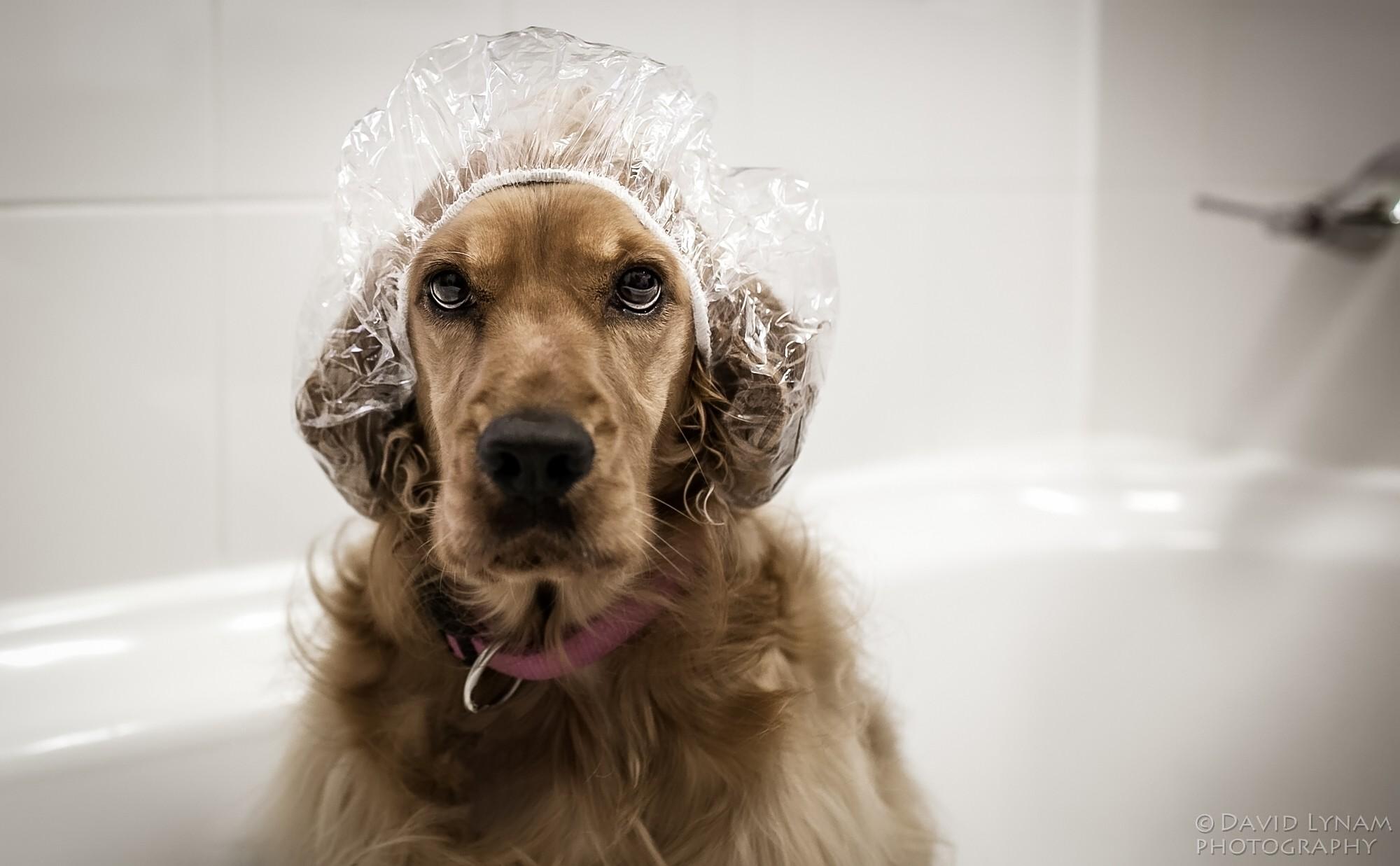 Tips To Reduce Dog Shedding