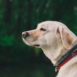 make pets eco friendly