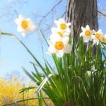 prepare home for spring